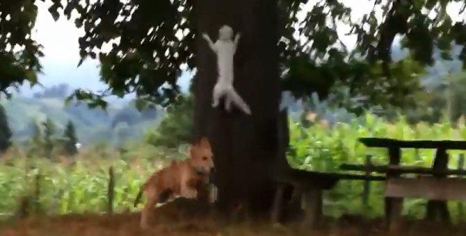 犬と追いかけっこする猫、驚くべき方法で回避する!