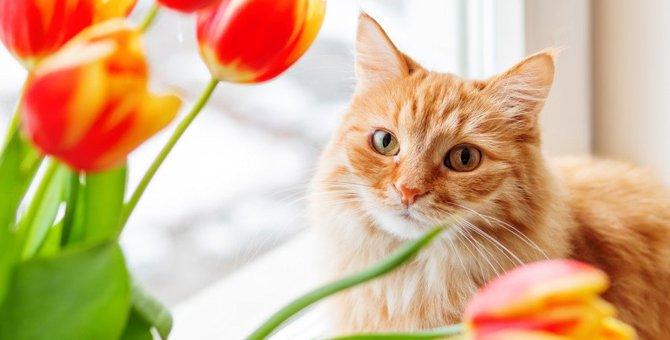 猫の命をおびやかす危険な『春の草花』5選!食べたら深刻な中毒症状になることも?