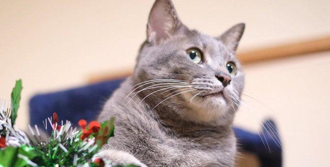 Laylaの12猫占い 12/23~12/29までのあなたと猫ちゃんの運勢