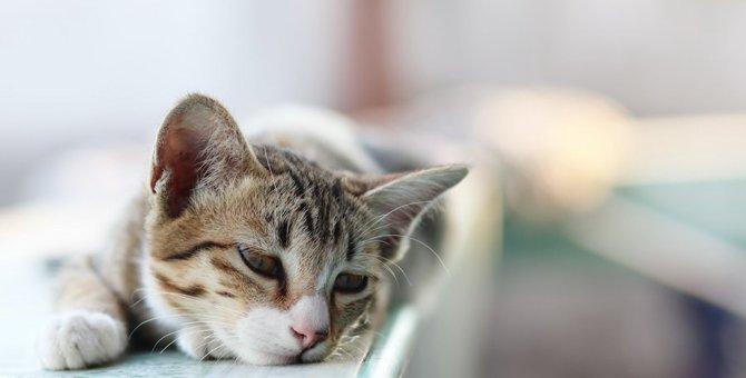 猫が『捨てられた』と誤解するかもしれない行動4つ