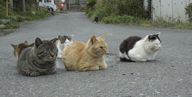 宮城県にある猫島「田代島」の魅力と行き方