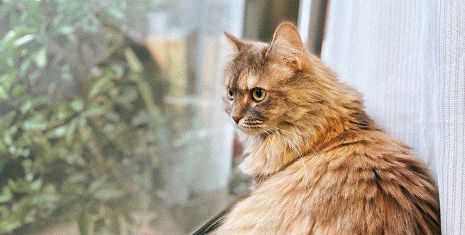 【猫心理】退屈?外で遊びたい?『窓の外を眺める猫』の気持ち4選