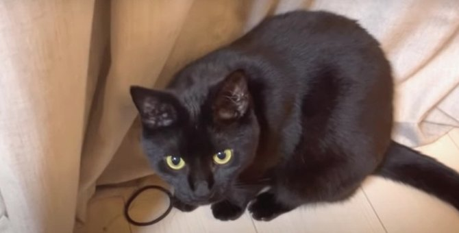 ヘアゴムでひとり遊びする黒猫さん!楽しそうな姿が可愛い♡