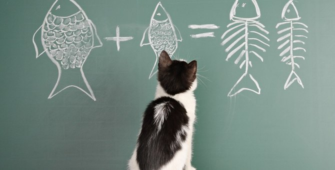 【雑学】猫の『顔』に関するおもしろ豆知識3選