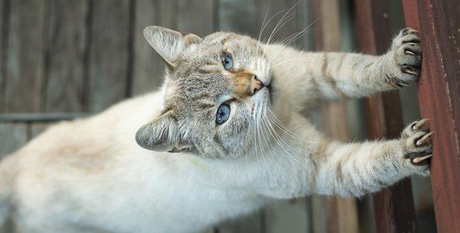 猫が賃貸住宅の柱で爪とぎ…どうしたらいい?対処法や予防法は?