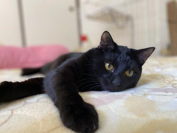 猫に『一緒に寝たい』と思われる人の条件3つ