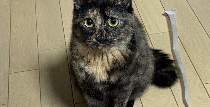 猫が飼い主のことを『束縛している時』によくする態度や行動4選