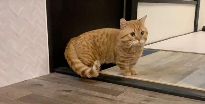 お引っ越し!新居を探検する猫ちゃんたち♡