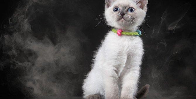 猫にタバコが有害な理由と誤飲した時の対処法について