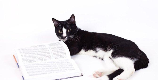 猫が大好きだった宇多天皇の日本最古の飼い猫記録とは