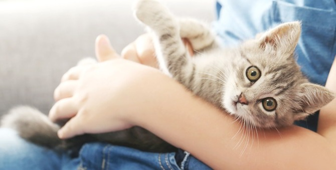 猫皮が三味線の弦に使われる理由について