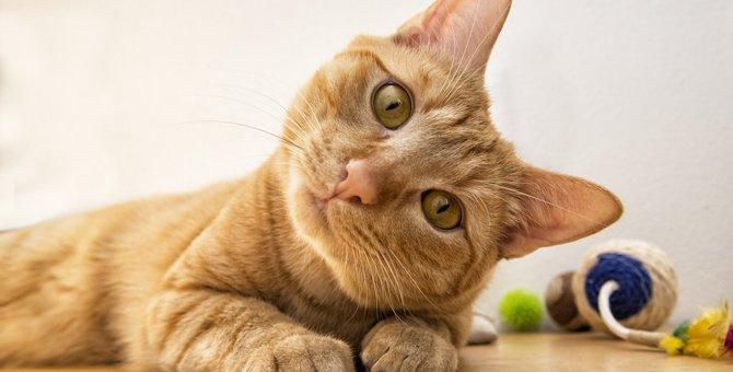 猫は飼い主を忘れる!?どんな人が忘れられちゃうの?