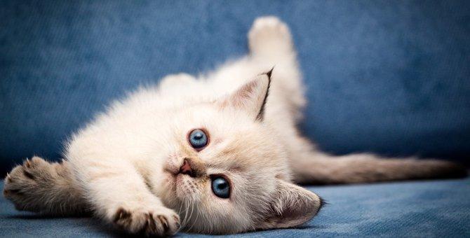 猫の『目の色』の種類3つ!色別の特徴とは?
