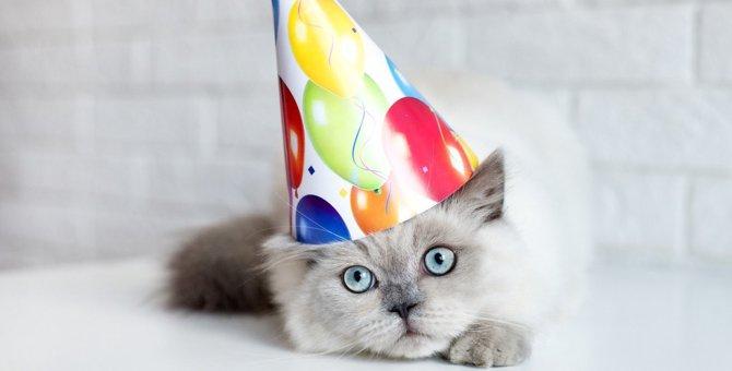 猫の『平均寿命』は何歳?寿命の長い種類や野良と室内猫の違い、長寿の秘訣を徹底解説!