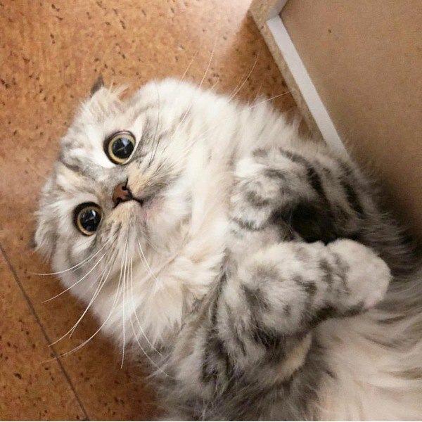 赤ちゃんと猫は一緒の部屋で過ごしても大丈夫?