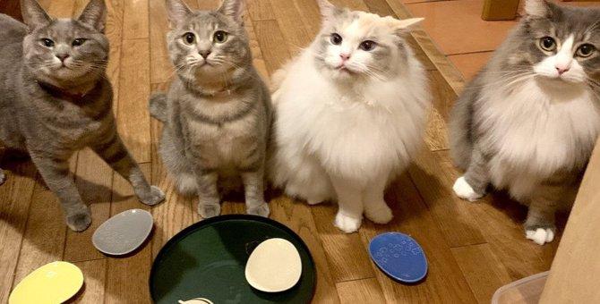 いくつ知ってた?『猫』の語源まとめて紹介5つの説