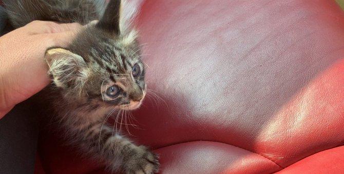 命は尊い!ギタリストと子猫の愛溢れる4日間に涙腺崩壊【後編】