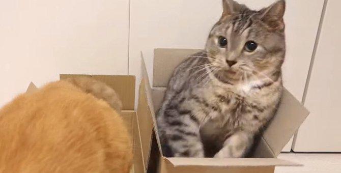 びっくりした時の猫ちゃんの表情が可愛い!