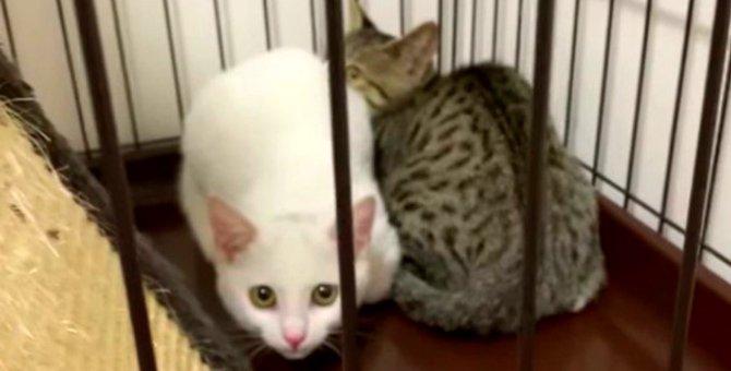母猫とはぐれた子猫2匹…愛あるケアで緊張がほぐれ甘えん坊に!
