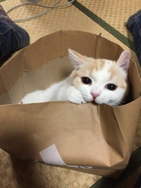 猫にとって『過ごしやすい部屋』の条件5つ