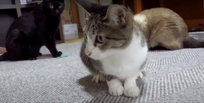 バタバタ禁止?!猫ちゃんのテンション急降下…