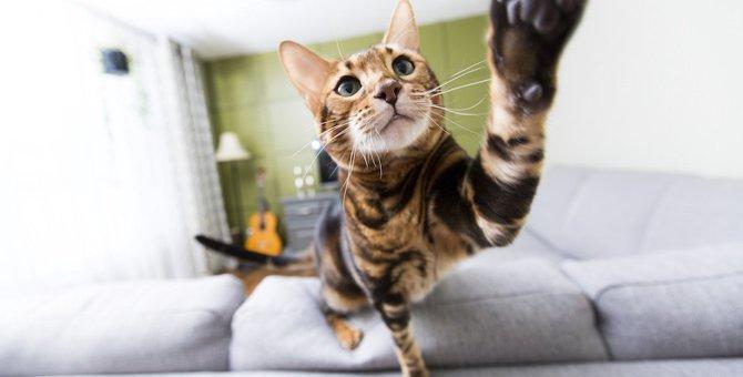 猫が他の猫の動画を見たときの4つのリアクション
