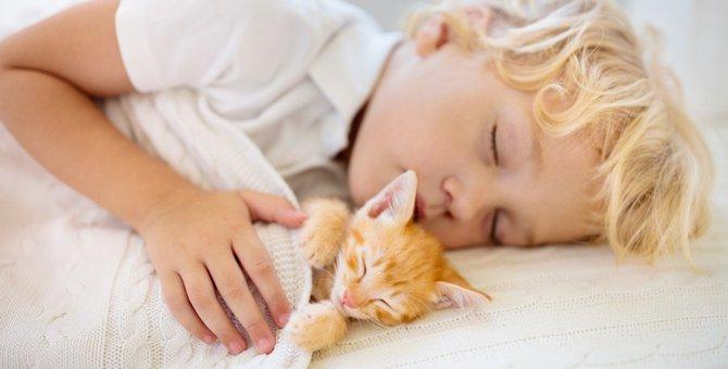 猫を飼う前に!『猫との生活』を考える人が絶対持つべき心構え3つ
