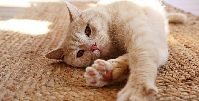 猫のストレスを解消する方法5つ
