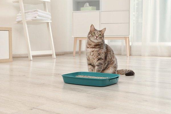 猫のニオイ対策!トイレや部屋の消臭方法など