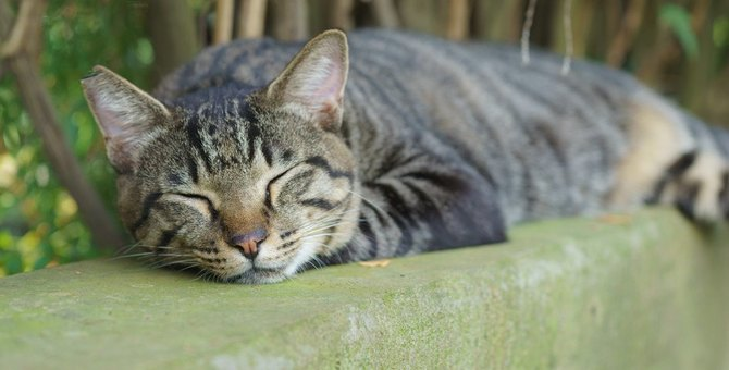かわいいけど困った…野良猫が我が家に住み着いた時の対処法