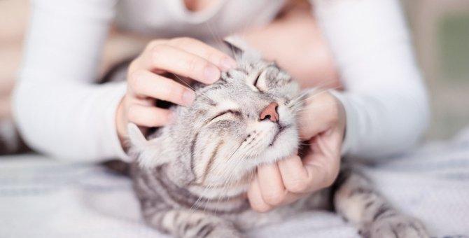 猫の気持ちいいところは?触ると喜ぶ6つの部分