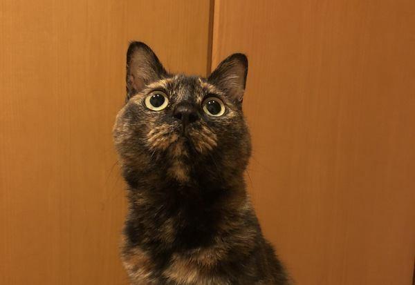 猫が目を見開いている時の心理5つ