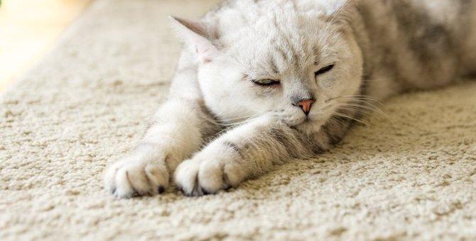 9カ月の猫の平均的な体重や餌など飼い方について