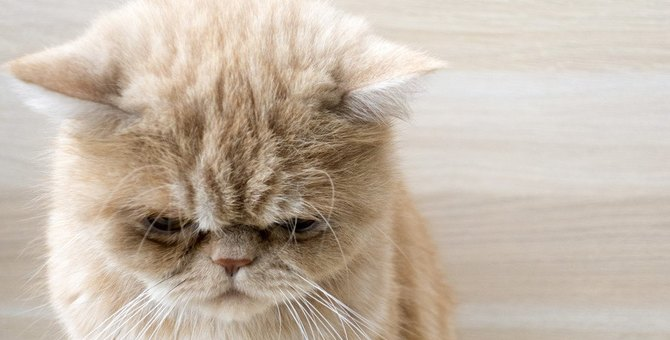 猫が『しょんぼり』してしまう原因5つ