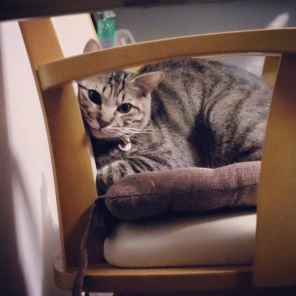 猫からの好きのサイン♡『飼い主の物に乗る』よく踏まれる9つの物