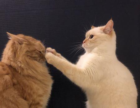 痛すぎる…!猫パンチをやめさせる方法3つ