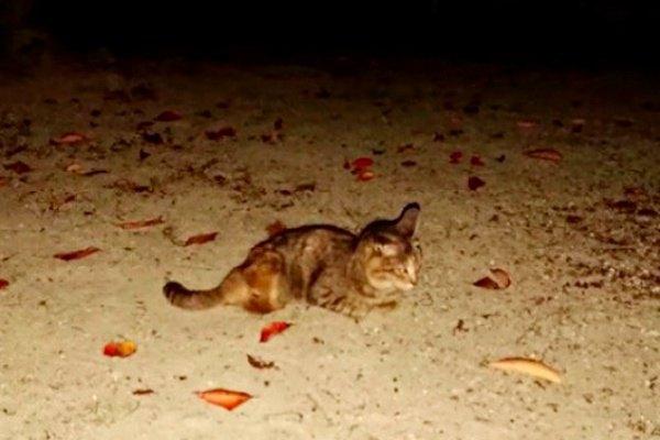 引っ越しで捨てられた2本足の猫…保護され心穏やかな日々へ
