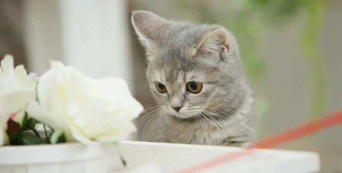 猫の好奇心は歳とともに変化する