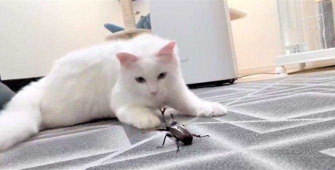 カブトムシと大激闘を繰り広げる猫さんに全Twitter民が悶える!