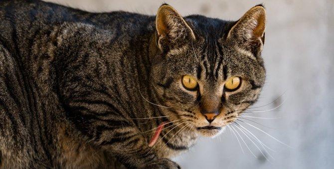 猫が飼い主に喧嘩を売っているときの仕草や行動4つ