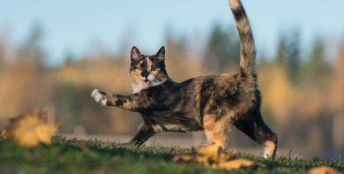 猫を触ろうとすると逃げてしまう理由5つ!もしかして、嫌われてるの…?