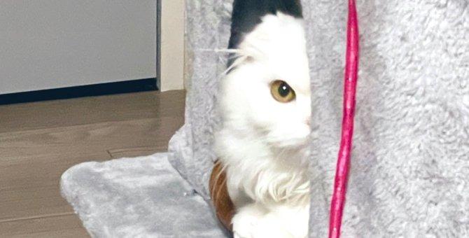 『ご飯…は?』真っ白美猫さんの無言の圧がすごい!