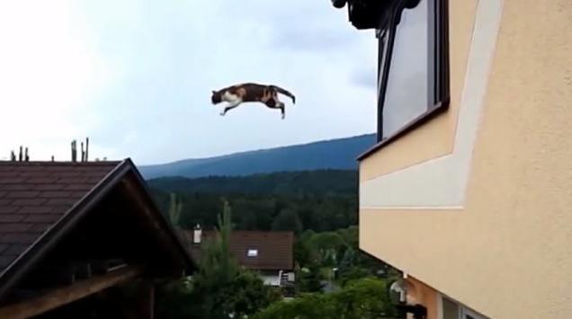猫の長距離ジャンプ!超スローモーションでお届けします♪