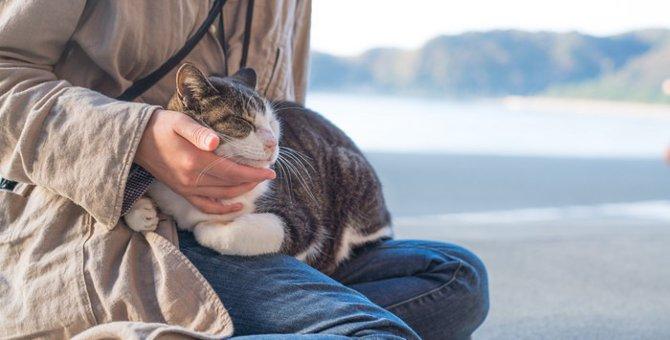 オス猫が甘えん坊である特徴や飼育の際の注意点について