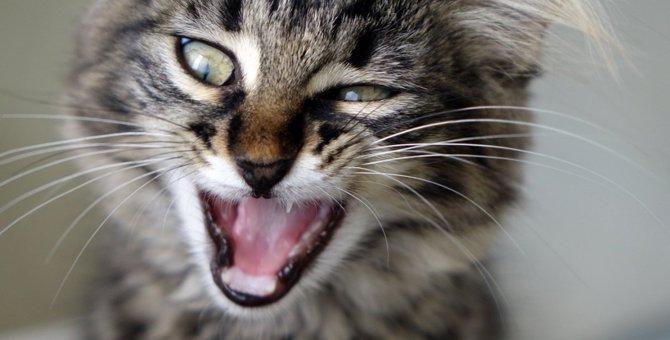 なぜ猫は『きゅうり』を見ると驚くの?その理由とやってはいけない行為を解説