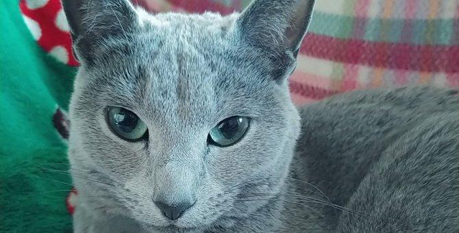 猫が飼い主の『真ん前に座ってくる』ときの意味4つ
