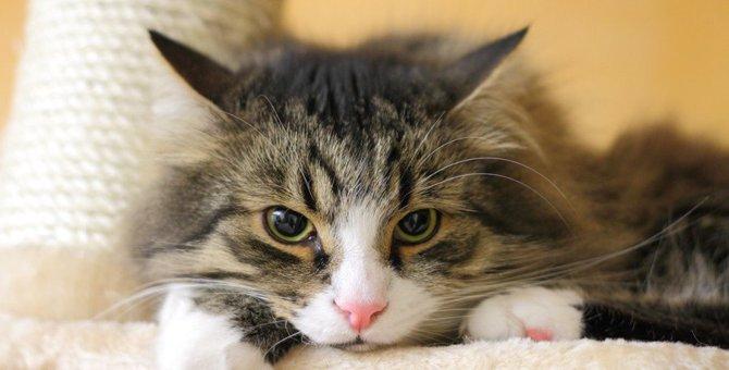 猫を悲しませる飼い主のNG行動4つ