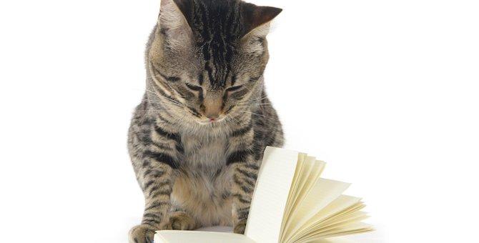 猫の手帳おすすめ商品3選