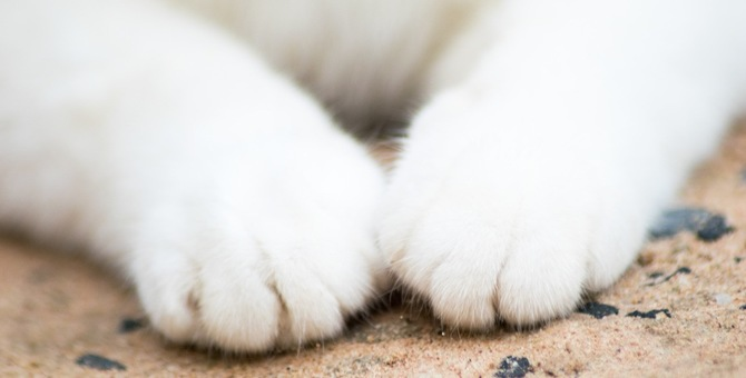 猫が自分の手をギュッと握りしめるのはどんな気持ちの時?