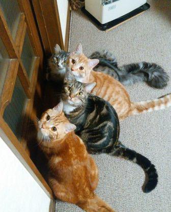 帰宅時に玄関にいる猫…ずっとそこで待ってたの?